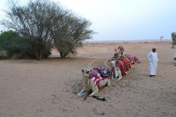 Al Maha Desert Resort, Al Diwaan, Dubai, Starwood 30