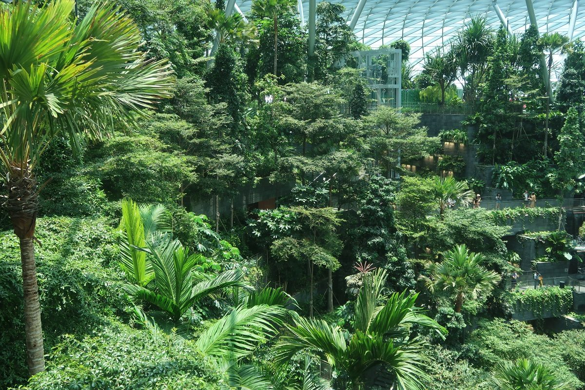 Jewel Changi Singapore Airport panoramic forest