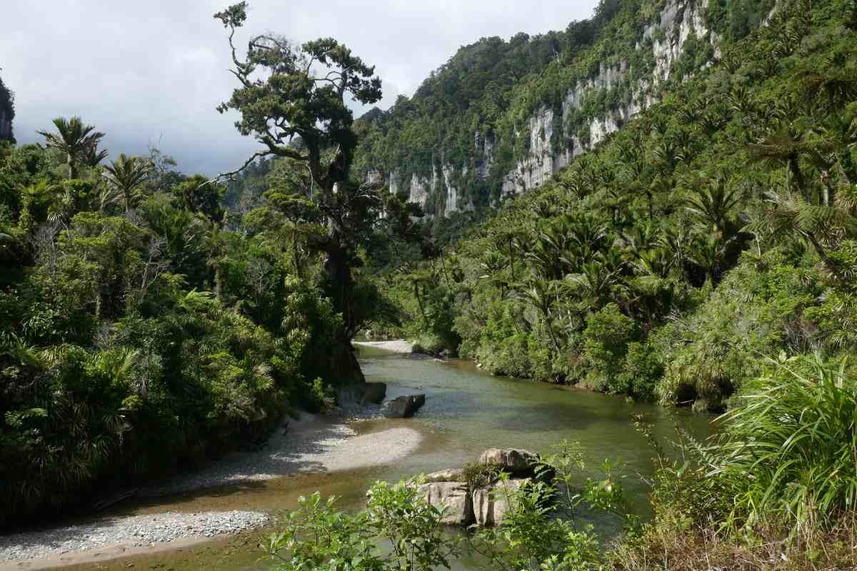 paparoa national park wild west coast south island new zealand