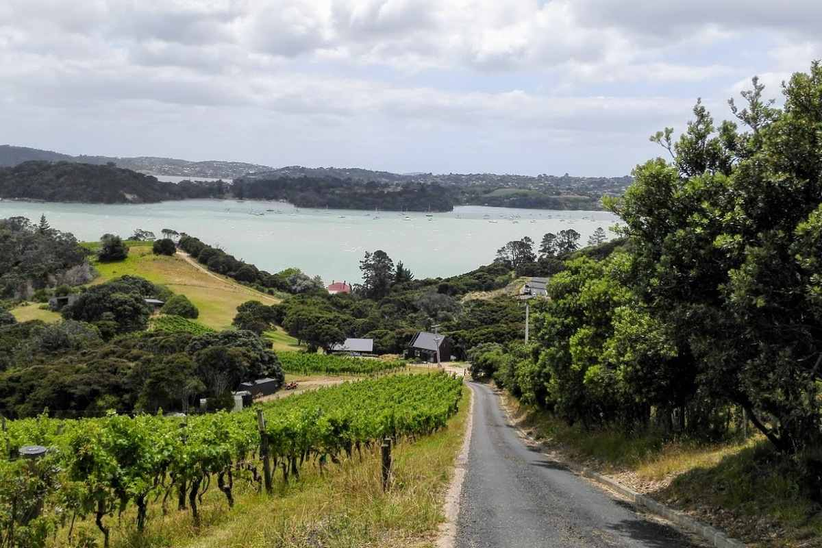 Waiheke farm and vineyard vista